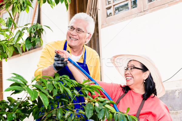 Asian senior couple smiling while watering green cultivated plan Stock photo © Kzenon