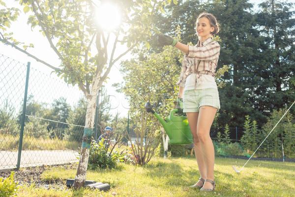 Stock fotó: Nő · kert · locsol · gyümölcsfa · konzerv · munka