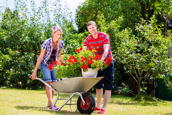 Couple in garden with barrow and flowers Stock photo © Kzenon