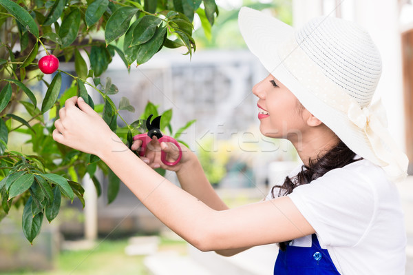 Side view portrait of young Asian woman pruning cultivated fruit Stock photo © Kzenon
