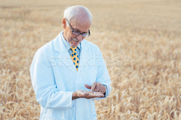 Agricultural scientist looking for quality of new seeds Stock photo © Kzenon