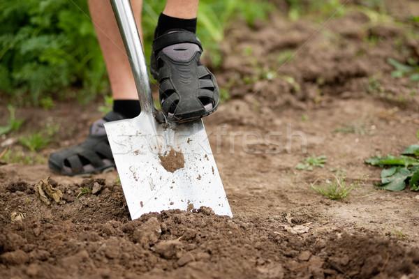 Gardening - digging over the soil Stock photo © Kzenon