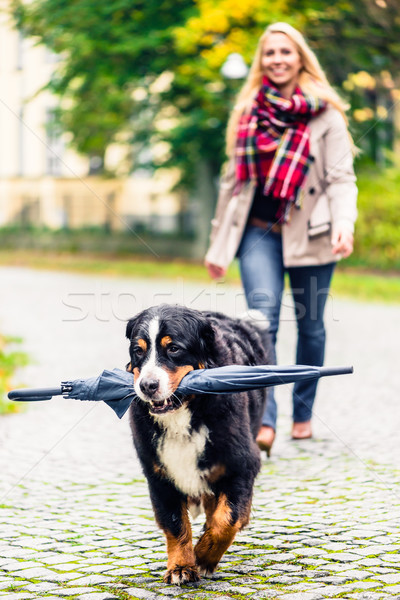 Dog carrying umbrella of his mom in autumn walk Stock photo © Kzenon