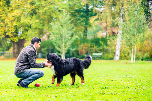 Dog retrieving ball for his dad in park Stock photo © Kzenon