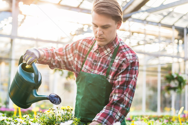 Skilled young man watering houseplants while working as florist  Stock photo © Kzenon