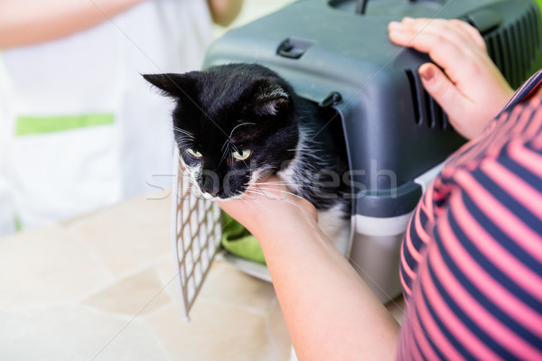 Cat brought to the vet or cat parlor Stock photo © Kzenon