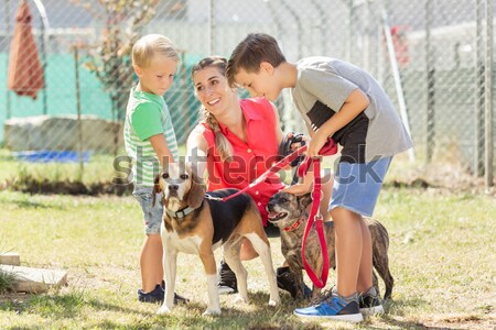 Young boy petting dog in animal shelter Stock photo © Kzenon