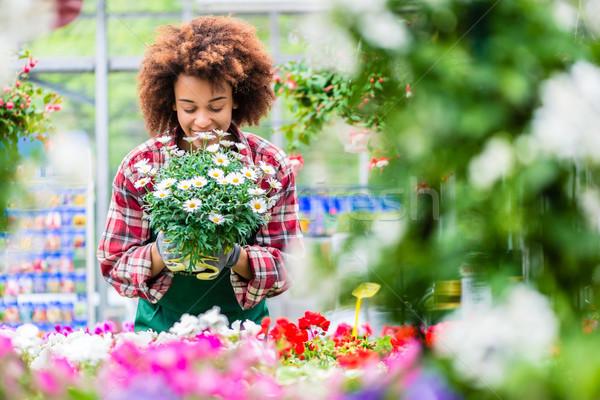 Fleuriste souriant belle Daisy fleur Photo stock © Kzenon