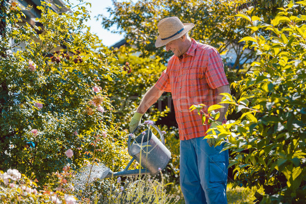 Active senior man watering plants in the garden in a tranquil day Stock photo © Kzenon