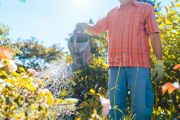 Active senior man watering plants in the garden in a tranquil summer day Stock photo © Kzenon