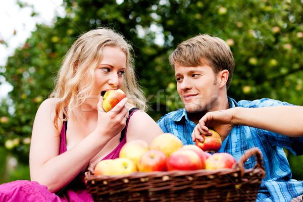 Cosecha comer manzanas Pareja hombre mujer Foto stock © Kzenon