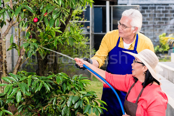 Asian senior couple smiling while watering green cultivated plants Stock photo © Kzenon