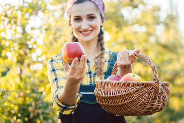 Woman on fruit orchard showing apple into the camera Stock photo © Kzenon
