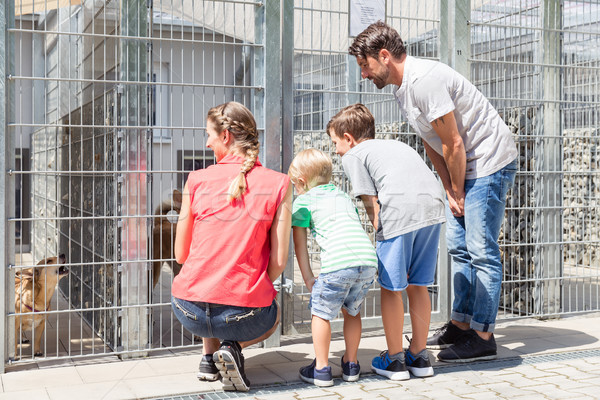 Stock photo: Family looking to adopt a pet from animal shelter