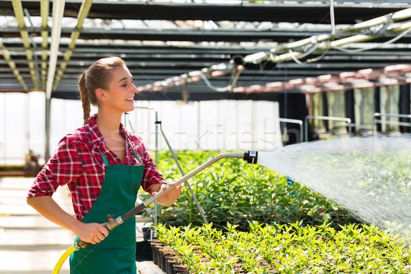 Homme commerciaux jardinier plantes marché Photo stock © Kzenon