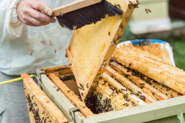 Bijen honingraat borstel man natuur frame Stockfoto © Kzenon