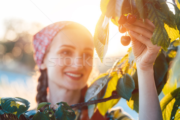 Mujer cerezas árbol cosecha tiempo nina Foto stock © Kzenon