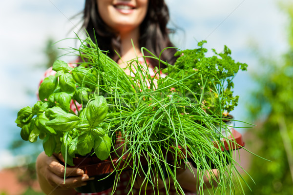 Gardening in summer - woman with herbs Stock photo © Kzenon