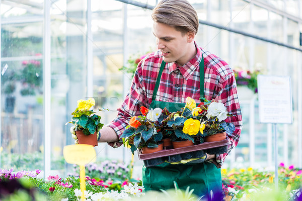 Young man holding a tray with potted flowers while working as florist Stock photo © Kzenon
