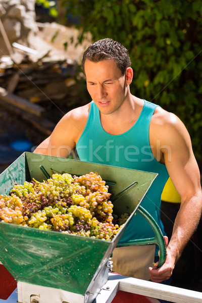 Winegrower working with grape harvesting machine Stock photo © Kzenon