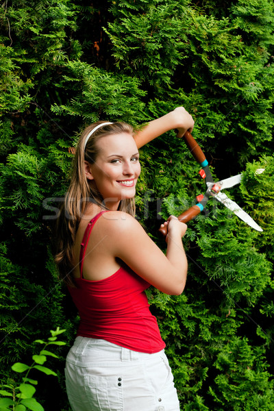 Woman in garden trimming hedge Stock photo © Kzenon