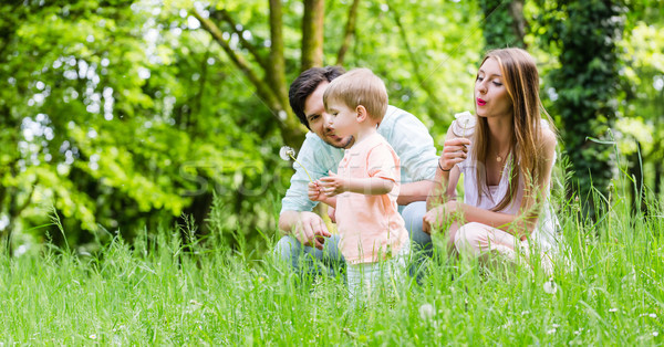 Family with son on meadow blowing dandelion seed Stock photo © Kzenon