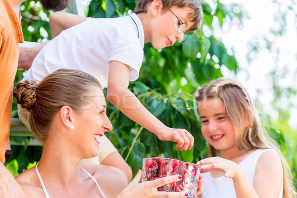 семьи еды вишни саду женщину Сток-фото © Kzenon