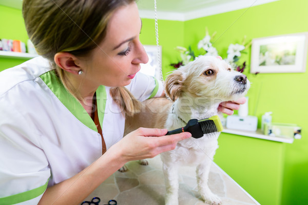 Manicure for dog in pet grooming salon Stock photo © Kzenon