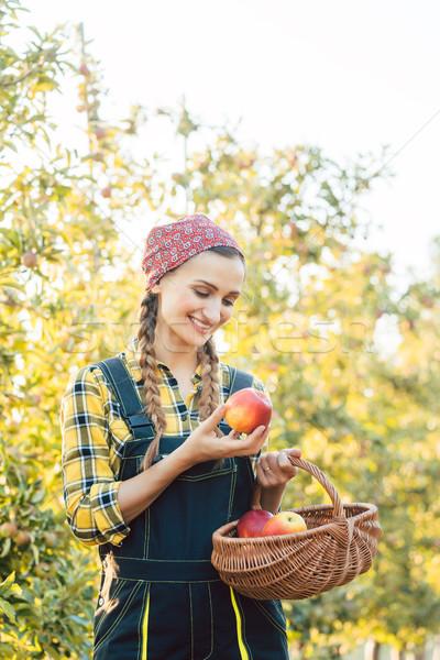 フルーツ 農家 女性 収穫 リンゴ バスケット ストックフォト © Kzenon