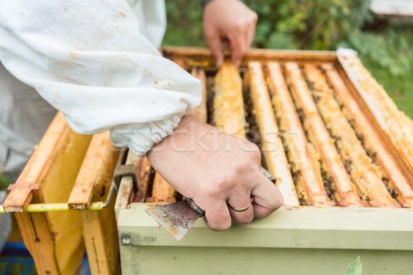 Méhek férfi dolgozik méz mezőgazdaság szabadtér Stock fotó © Kzenon