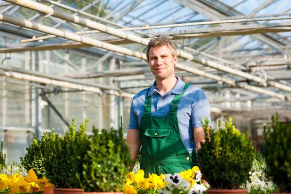 Kertész piac kert faiskola férfi virágárus Stock fotó © Kzenon