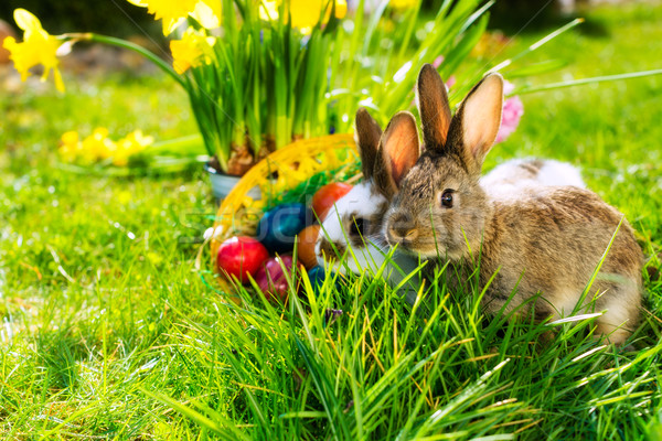 Easter bunnie on meadow with basket and eggs Stock photo © Kzenon