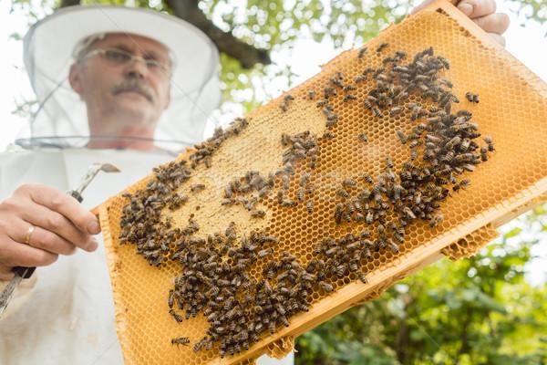 Favo · de · mel · abelhas · mãos · natureza · fazenda - foto stock ...