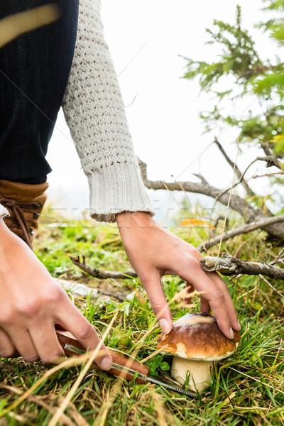 Young mushroom picker in the Bavarian alps Stock photo © Kzenon