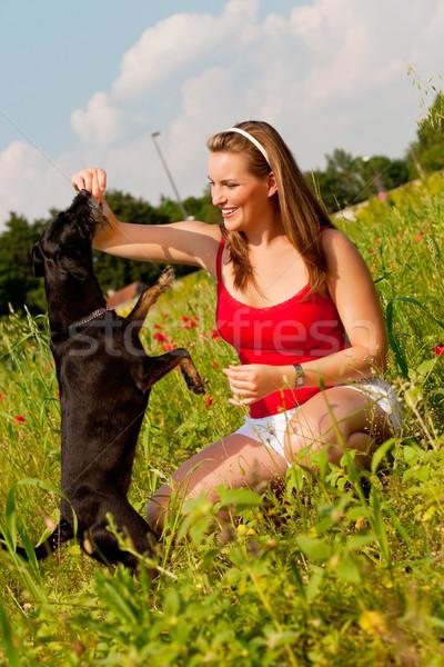 Vrouw spelen hond weide zomer liefde Stockfoto © Kzenon