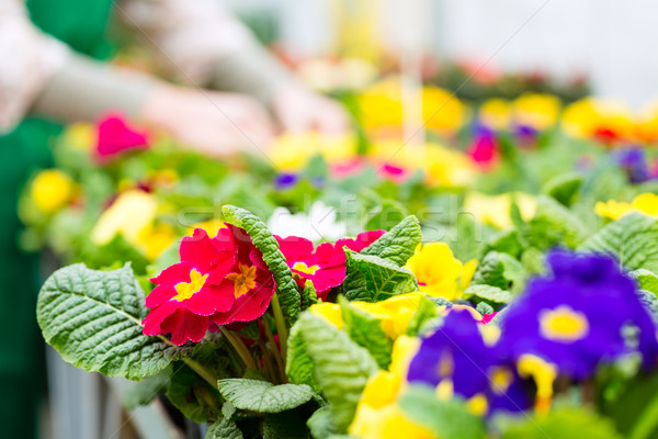 Gardener in market garden or nursery Stock photo © Kzenon