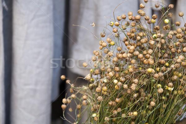 Grama fundo verão verde saco agricultura Foto stock © laciatek
