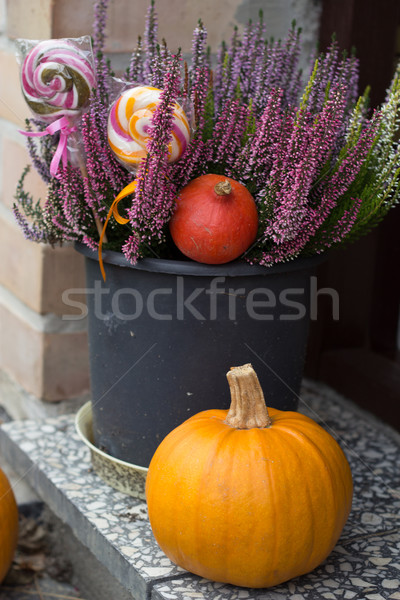 autumn decoration Stock photo © laciatek