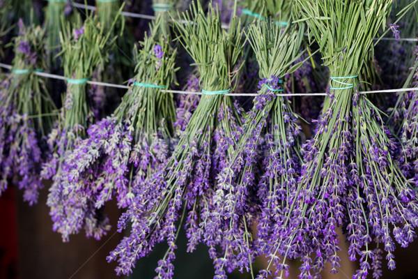 ラベンダー 薬 黒 花束 文字列 紫色 ストックフォト © laciatek