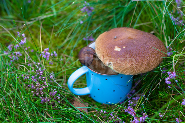 Boletus in a blue dots mug among the heather Stock photo © laciatek