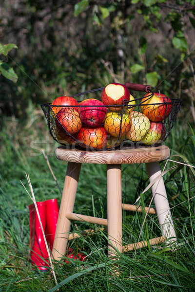 red boots and organic autumn apples in a basket on a wooden table in an orchard Stock photo © laciatek