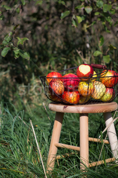 organic autumn apples in a basket on a wooden table in an orchard Stock photo © laciatek