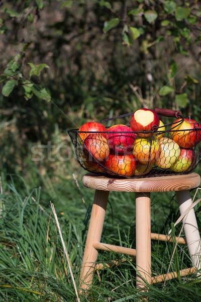 Organiczny jesienią jabłka koszyka drewniany stół sad Zdjęcia stock © laciatek