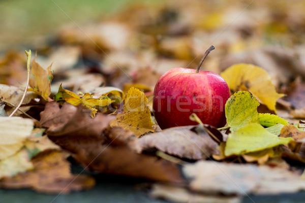 Outono maçã vermelha folha jardim fundo verde Foto stock © laciatek