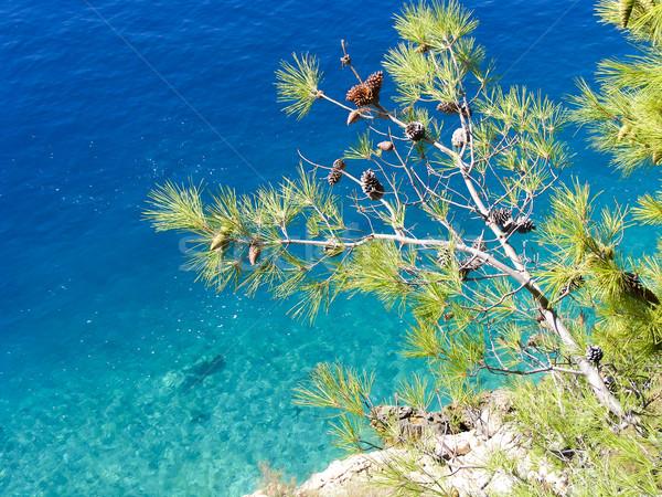 Zee Kroatië water natuur zomer Blauw Stockfoto © laciatek
