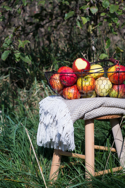 blanket and organic autumn apples in a basket on a wooden table in an orchard Stock photo © laciatek