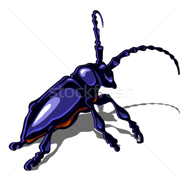 A big blue beetle isolated on a white background. Vector illustration. Stock photo © Lady-Luck