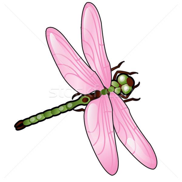 Cartoon Dragonfly розовый крыльями изолированный белый Сток-фото © Lady-Luck