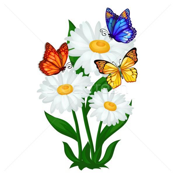 плакат эскиз лет ромашка цветы красочный Сток-фото © Lady-Luck