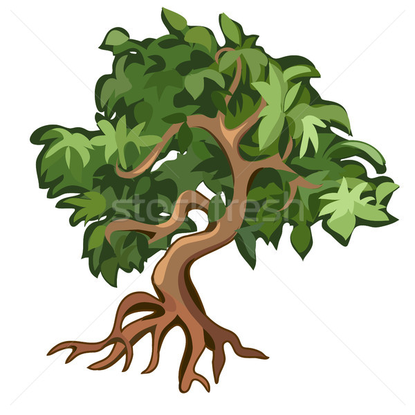 Deciduous tree with exposed roots isolated on white background. Vector illustration. Stock photo © Lady-Luck